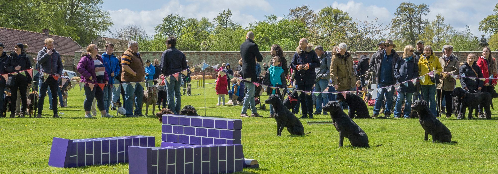 Festival of Dogs