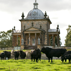 Cows grazing by the Temple of the Four Winds